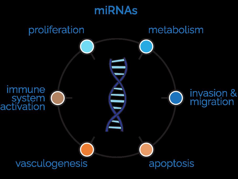 InteRNA Technologies